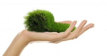 Illustration de Choisir de la pelouse artificielle : un choix écologique ?