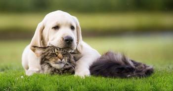 Illustration : Chien, chat et gazon artificiel : Est-ce vraiment adapté ?