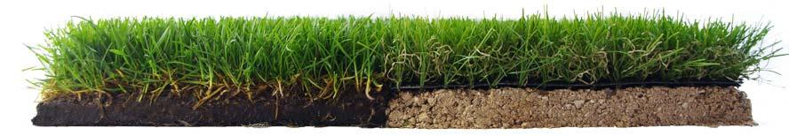 Comparaison d'un modèle de gazon synthétique Azurio et d'une pelouse naturelle